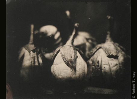 11x14 wetplate 1 by photographer Robert Turney