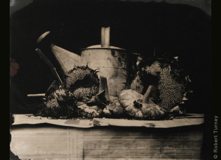 11x14 wetplate 3 by photographer Robert Turney
