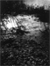 Looking Glass River #9 gelatin silver print by photographer Robert Turney